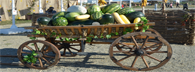 Krasnodar region develops agritourism